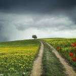 logística verde ecológica y sostenible