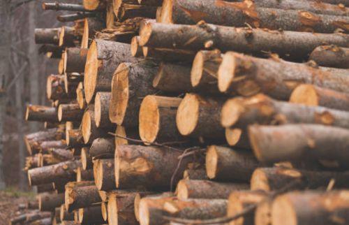 ¿Qué es la madera?