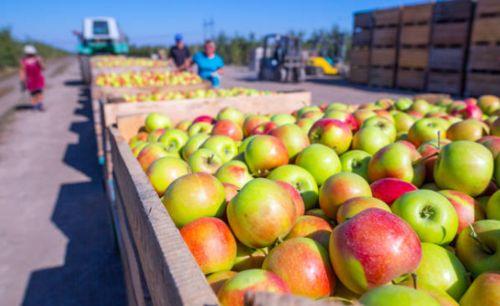 Tecnología en la cadena de suministro de alimentos