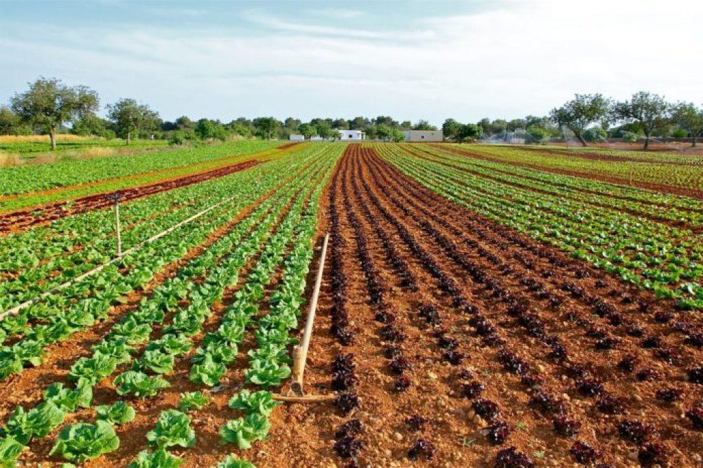 cultivos agrícolas