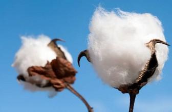 Todo sobre las propiedades del algodón
